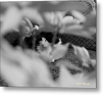 Metal Print featuring the photograph Find The Kitty by Jeanette C Landstrom