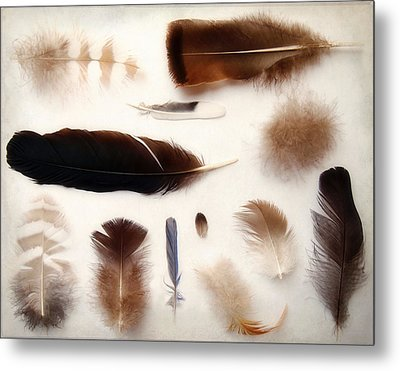 Finding Feathers Metal Print by Angie Rea