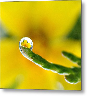 Finger Tip Flower Metal Print