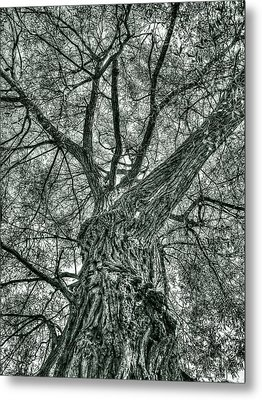 Finkles Landing Tree Metal Print