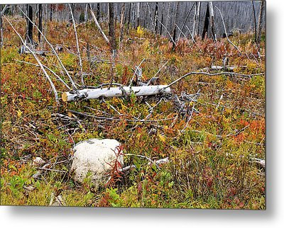 Fire And Fall Metal Print by Susan Kinney