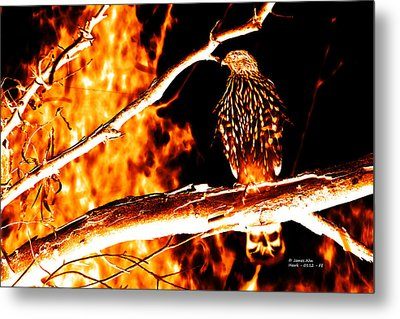 Fire Hawk 0112 Metal Print by James Ahn