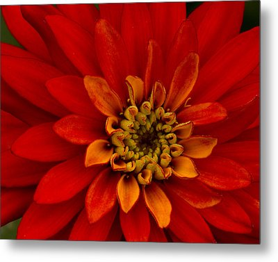 Metal Print featuring the photograph Firecracker by Carrie Cranwill