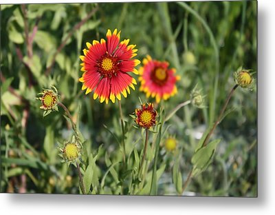 Metal Print featuring the photograph Firewheel by Lynnette Johns