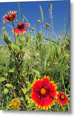 Metal Print featuring the photograph Firewheels Galour by Lynnette Johns