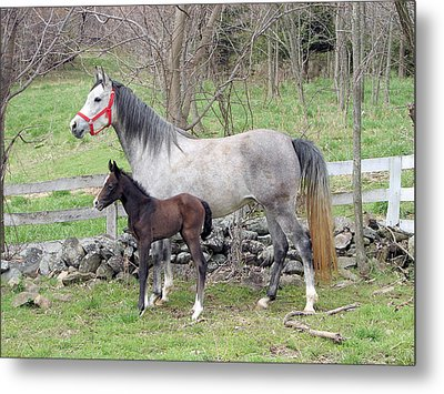 First Born Metal Print by Heather  Boyd