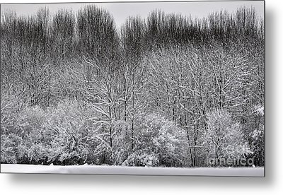 First Snow Metal Print by Diane E Berry