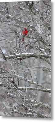 First Snow Fall Metal Print by Kume Bryant