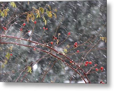 First Snow... Metal Print by Frederic Vigne
