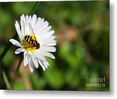 First Spring Bee Metal Print