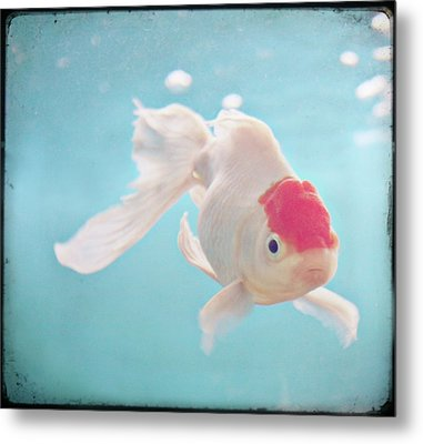 Fish In The Sea Metal Print by photo by Anna Theodora