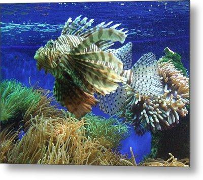 Fish Metal Print by King Ify