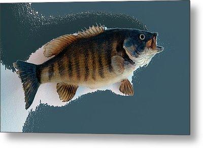 Fish Mount Set 10 B Metal Print by Thomas Woolworth