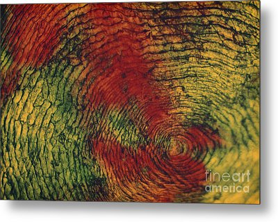 Fish Scale Metal Print by Eric V. Grave