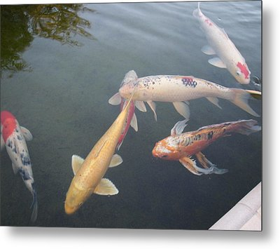 Fish Swimming Metal Print by Val Oconnor