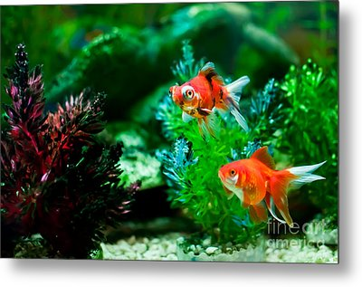 Metal Print featuring the photograph Fish Tank by Matt Malloy