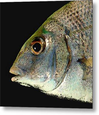 Fisheye Metal Print by Karen Lynch