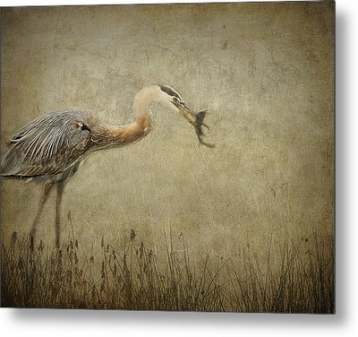 Fishin' Metal Print by Mario Celzner