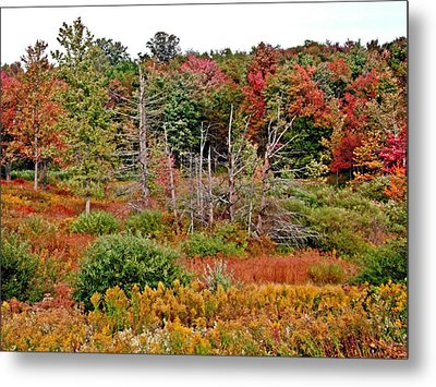 Metal Print featuring the photograph Flaming Meadow by Christian Mattison