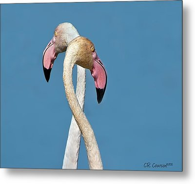 Flamingo Couple Metal Print by CR  Courson