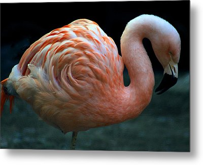 Metal Print featuring the photograph Flamingo by Tammy Espino