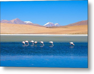 Flamingos At Lake Metal Print by Werner Büchel