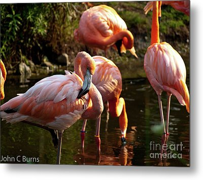 Metal Print featuring the photograph Flamingos by John Burns