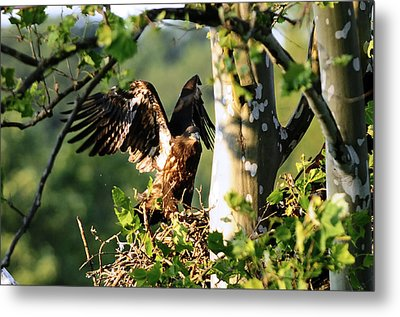 Metal Print featuring the photograph Fledgling Testing The Wind by Randall Branham
