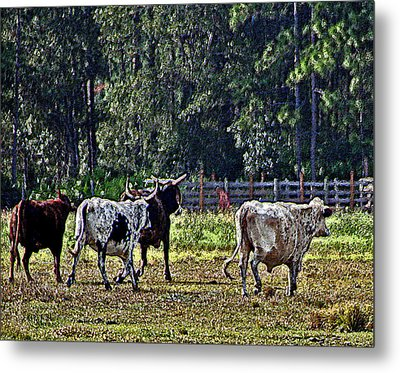 Fleeing Cows Of 441 Metal Print