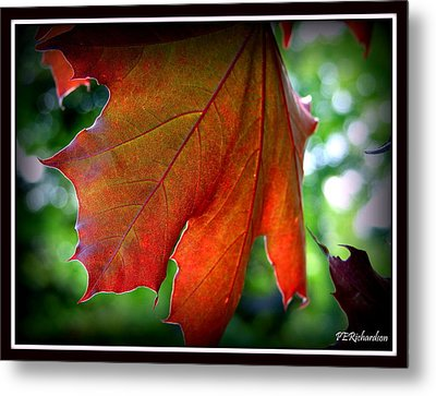 Fleeting Metal Print by Priscilla Richardson