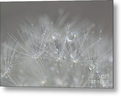 Fleur Cristalline Metal Print