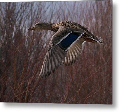 Flight Is Beautiful Metal Print