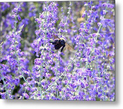 Flight Of The Bumble Bee Metal Print by Rhiannon Hamm