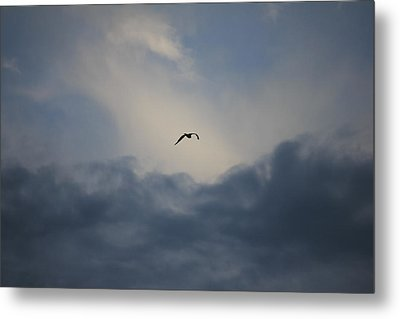Metal Print featuring the photograph Flight To Heaven by Penny Meyers