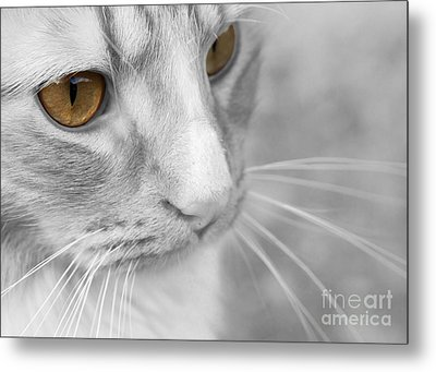 Flitwick The Cat Metal Print by Jeannette Hunt