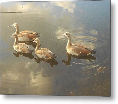 Floating Along Metal Print