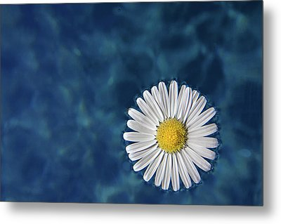 Floating Daisy Metal Print by Andrea Mucelli