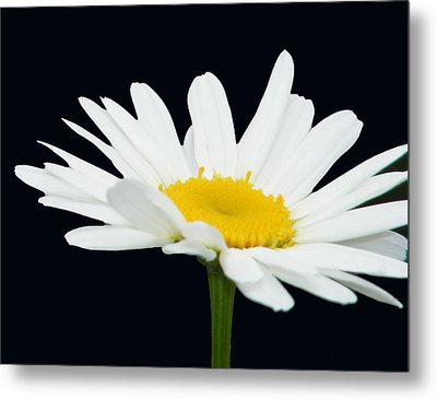 Floating Daisy Metal Print