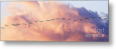 Flock Of Geese At Sunset Metal Print by Larry Ricker