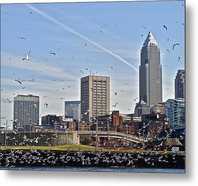 Flock Of Gulls In Cleveland  Metal Print by MB Matthews