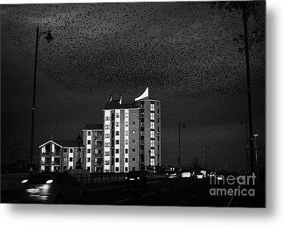 Flock Of Starlings Flying In Murmuration Over Apartments And Albert Bridge Belfast Northern Ireland Metal Print by Joe Fox