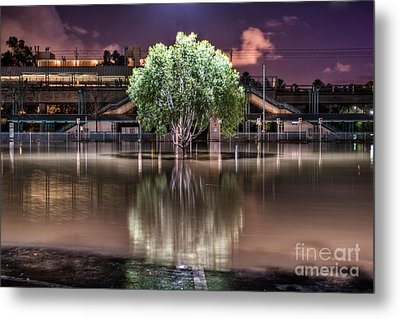 Metal Print featuring the photograph Flooded Tree by Sonny Marcyan