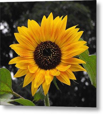 Flora Sunflower Metal Print