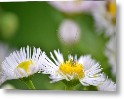 Metal Print featuring the photograph Floral Launch-pad by JD Grimes