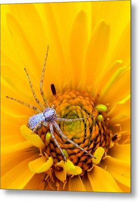 Floral Spider Metal Print