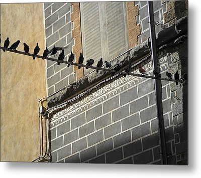 Metal Print featuring the photograph Florentine Pigeons by Laurel Best
