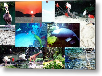 Florida Collage 001 Metal Print by Maureen E Ritter