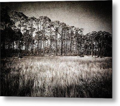 Florida Pine 2 Metal Print by Skip Nall