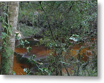 Florida Tea Metal Print by Sean Green