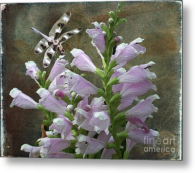 Flower And Dragonfly Metal Print by Jim Wright
